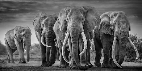 DAVID YARROW Exhibition | October 17th - November 10, 2019 tickets