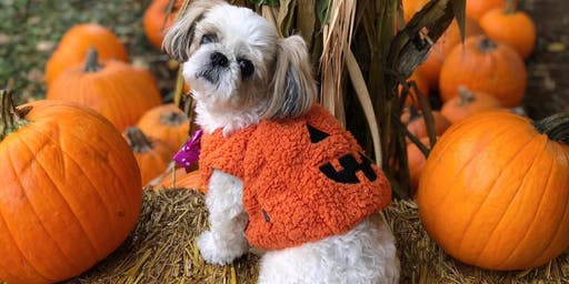 1st PawshX Halloween Pawty