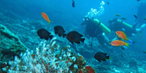 Mergulho de Batismo em Arraial do Cabo