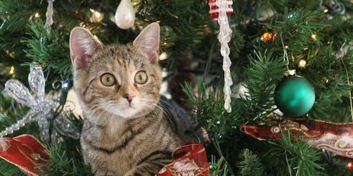 Kerst en Nieuwjaar met je kat