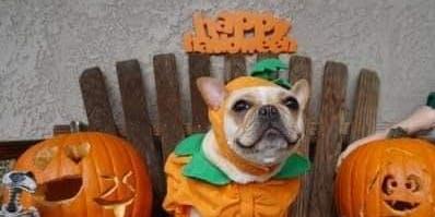 PAAW's Halloween Bash