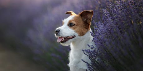 Safe Aromatherapy for Dogs tickets