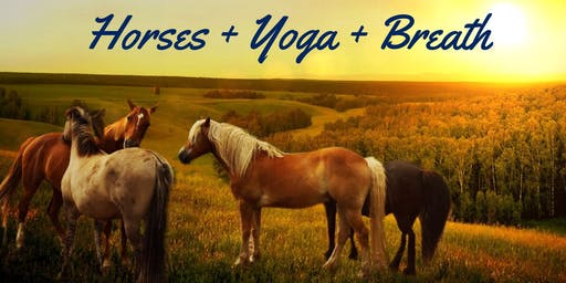 The Presence of Horses, Yoga, Breath a 6 Week Series