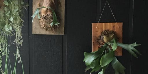 Staghorn Fern Workshop