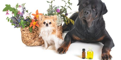 Beginners Aromatherapy for Dogs