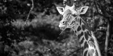 Hunt's Photo Walk: Franklin Park Zoo tickets