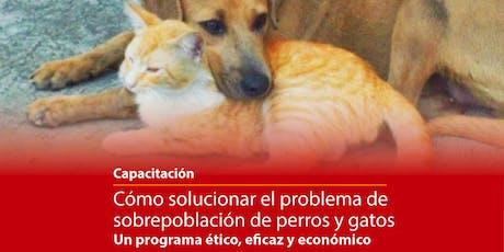 CAPACITACIÓN REGIONAL Como solucionar la sobrepoblación de perros y gatos entradas