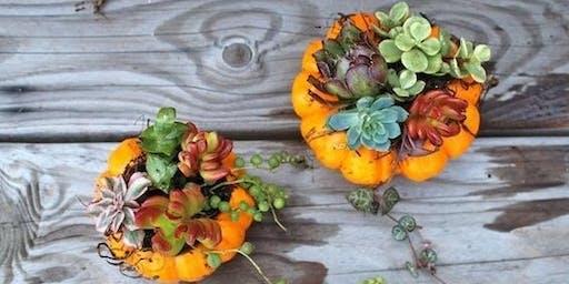 Pumpkin Succulent Make & Take