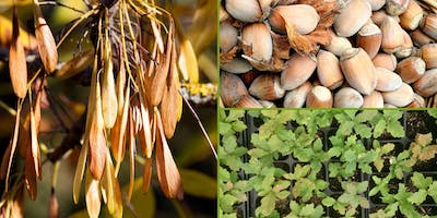 Training:  Seed collection & propagation