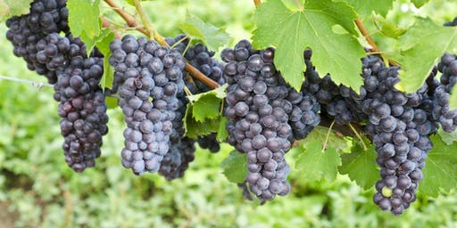 """Wine Tasting in Richmond - """"The wines of Veneto and Valpolicella"""""""