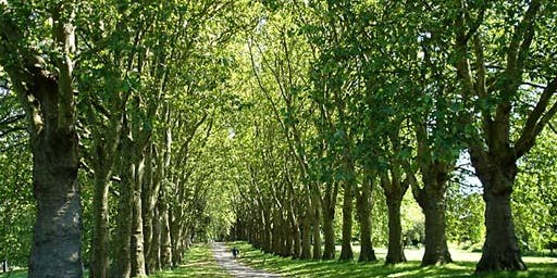 Nature Walk around Bristol - Avon Needs Trees Fundraiser