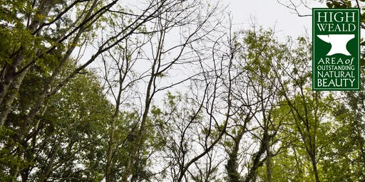 Ash Dieback in the High Weald a look at the trees