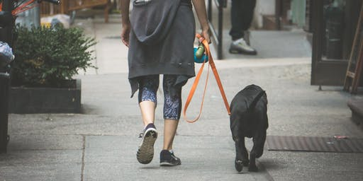 Dog Poop Compost? Living Zero Waste as a Dog Owner
