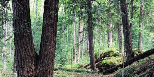 Wellness@Loyalist Forest Therapy Session