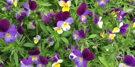 GEMS: Michal Yakir's Table of Plants, Column 5 - Dr Geraghty + Dr Thompson tickets