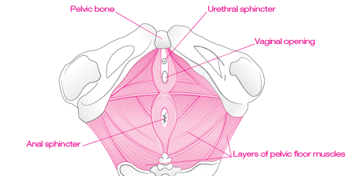 Yoga for Pelvic Floor Strength