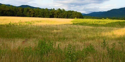 Explore the Native Grasslands of Southeast Tennessee [ Field Trip]