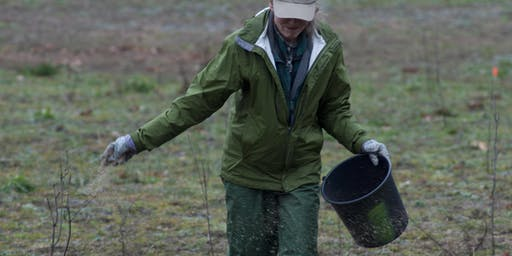Black Friday Prairie Planting at Saul Lake Bog
