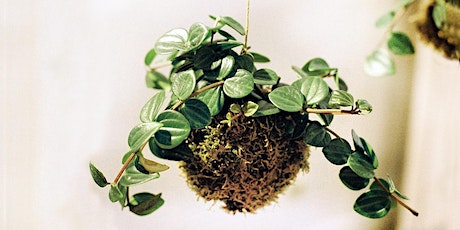 Kokedama workshop for beginners Tickets