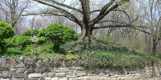 Nature Photography: Capturing Isham Park