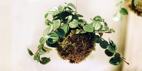 Beginner Kokedama Workshop, lets get green and dirty! Tickets