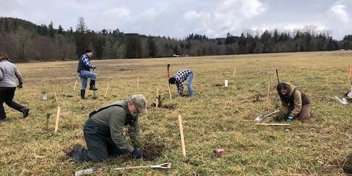 Powell Creek Planting Preparation - 10/16