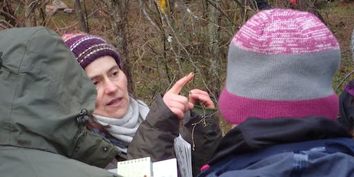 Winter Tree Identification at River Findhorn