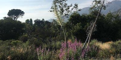 Rejuvenature's Healing Women's Hike