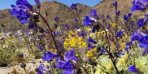 Wildflower Nature Walk