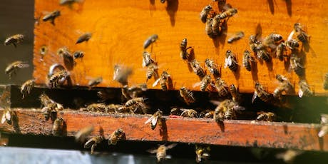 An Introduction to Home Beekeeping tickets