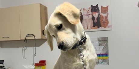 Meeting de Comportament Canin - Puiuții noștri, îngrijire și socializare tickets