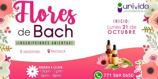 Taller de Flores de Bach Pachuca