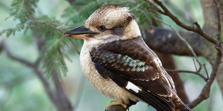 Bird Count at Carss Bush Park tickets