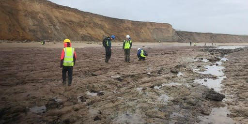 Brook Bay, Isle of Wight - GEOLOGICAL AND FOSSIL FIELD TRIP