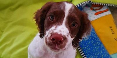 Puppy Life Skills. Bursledon 6.30pm