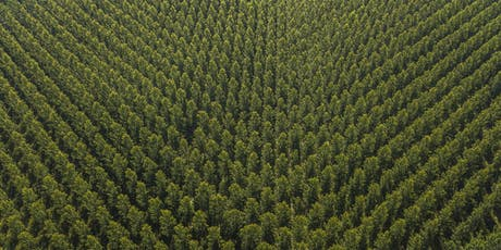 The future of plantation forests in Europe  tickets