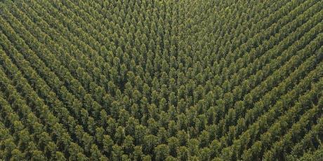 The future of plantation forests in Europe  biglietti
