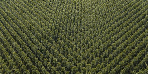 The future of plantation forests in Europe