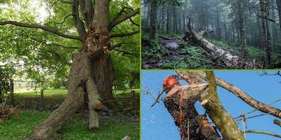 Training:  Tree inspection training