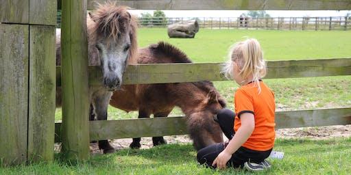 Pony Handling