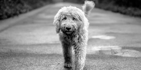 Doodle Grooming Seminar With Julie Harris LCGI GMG tickets
