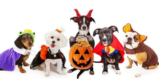 Hallow-Wiener Doggie Costume Party!