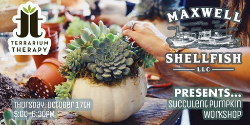 Succulent Pumpkin Workshop at Maxwell Shellfish