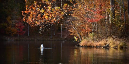 Friends of Ten Mile Creek Fall Color Pontoon Boat Tour