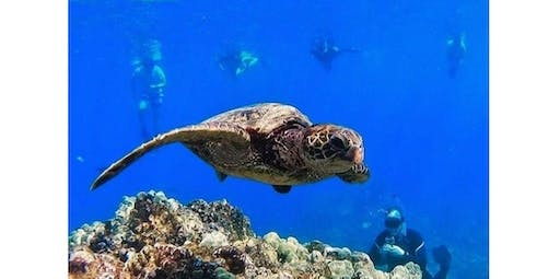 Reef and Dolphin Snorkel (2019-12-01 starts at 8:30 AM)