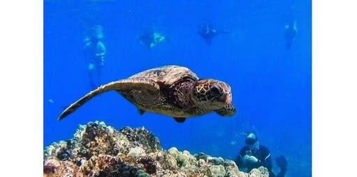 Reef and Dolphin Snorkel (2019-10-24 starts at 8:30 AM)