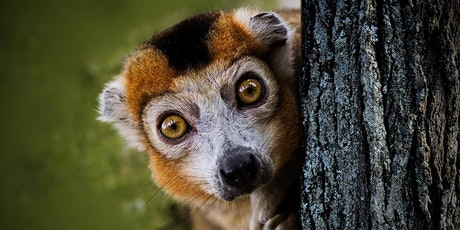 The Lemurs of Madagascar tickets