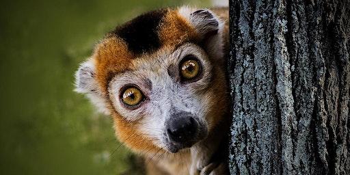 The Lemurs of Madagascar