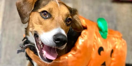 Bushwick Bark's 7th Annual Halloween Doggy Costume Contest Fundraiser tickets