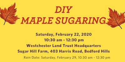 DIY Maple Sugaring